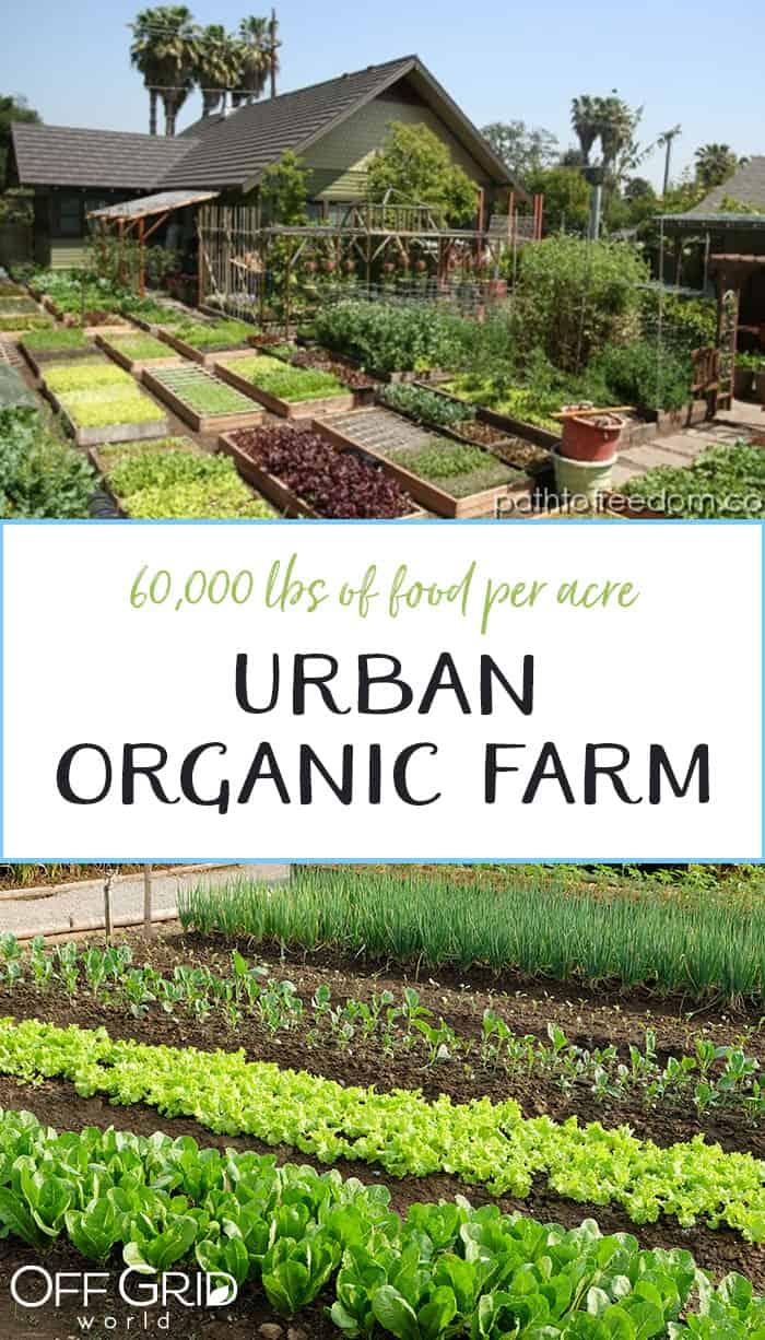 60 000lbs Of Organic Food Per Acre Off Grid World