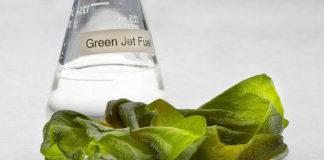 algae biofuel