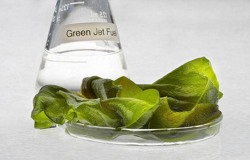 Algae Jet Fuel