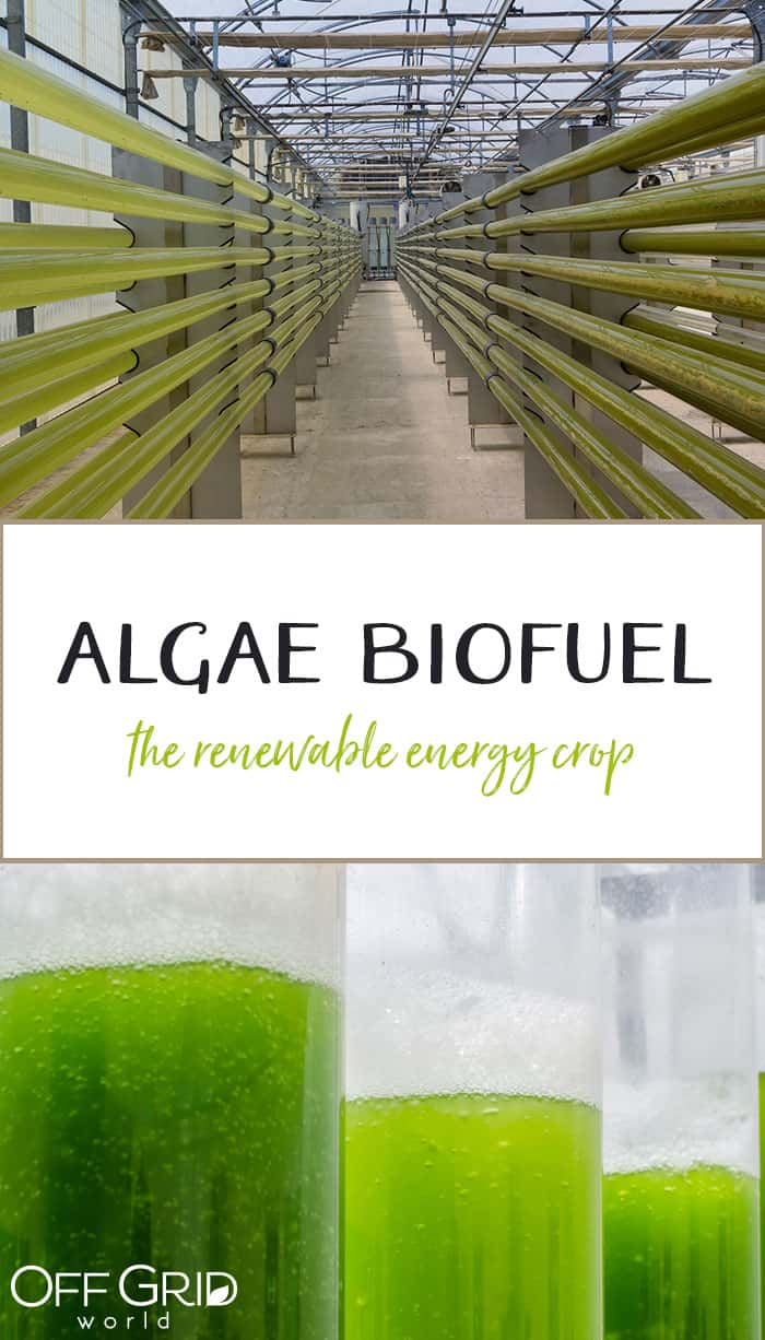 Algae as biofuel