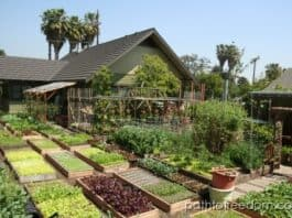 Urban organic farming