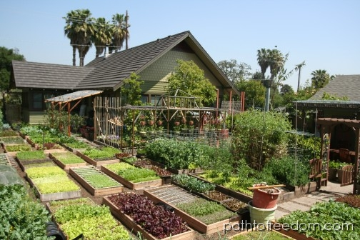 Self Sufficient Backyard Ideas : Image Source httpurbanhomesteadorgjournal20080419nytimes
