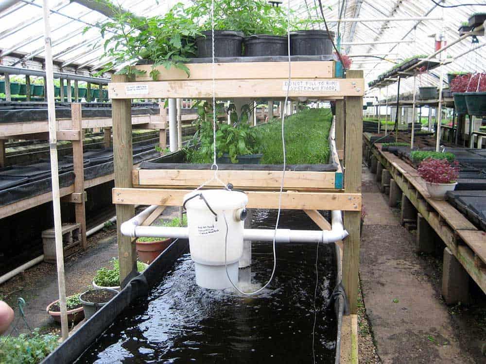 Growing Power aquaponics