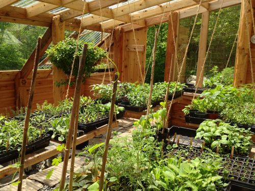Sheltered Greenhouse Interior