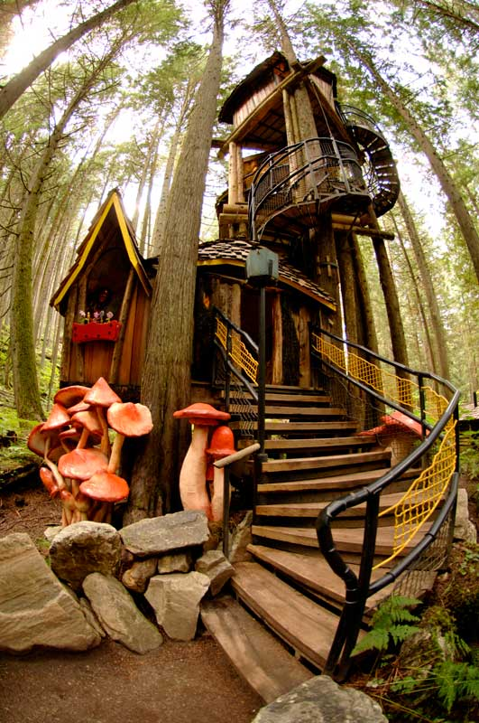 enchanted forest tree house2