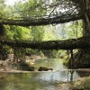 """Incredible 500 Year Old """"Living"""" Root Bridges in India"""