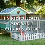 16 Ridiculously Adorable Chicken Coops