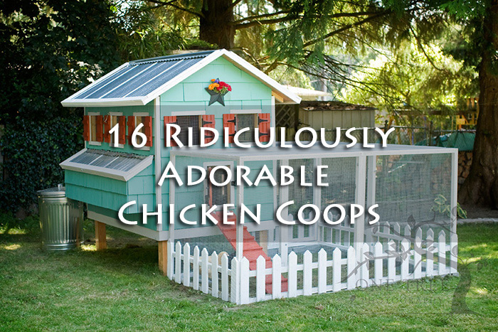 Cute chicken coop plans - photo#9