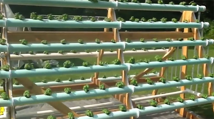 A Frame Vertical Hydroponic Garden Grows 168 Plants Off