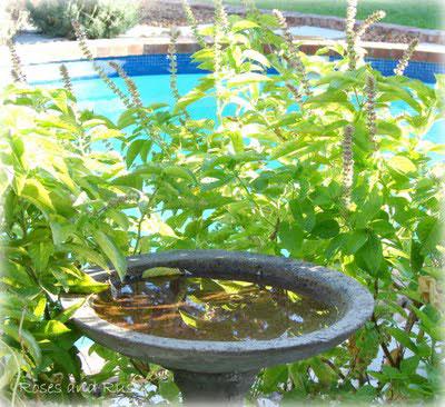 garden-pavers2