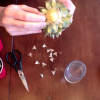 How to Grow a Pineapple From The One You Just Ate