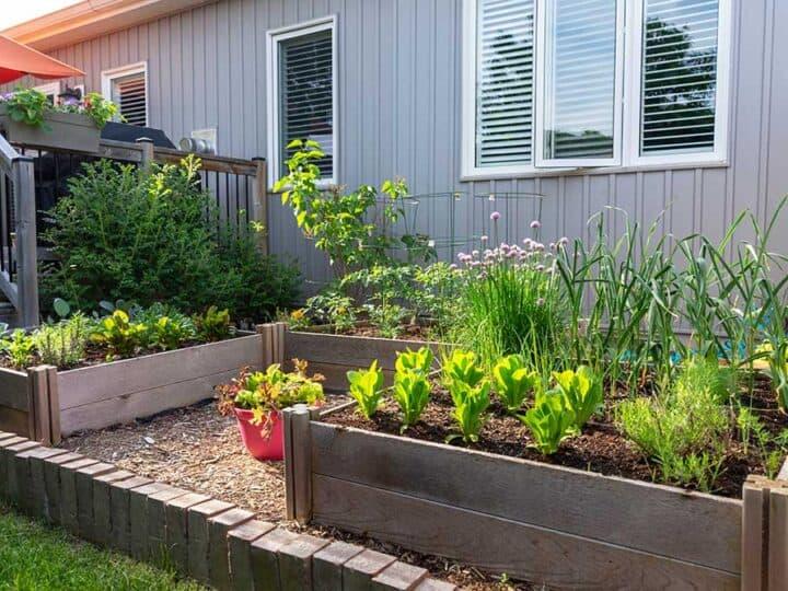 7 Gorgeous Raised Bed Vegetable Gardens
