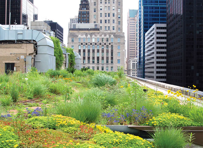 Green roof in Chicago