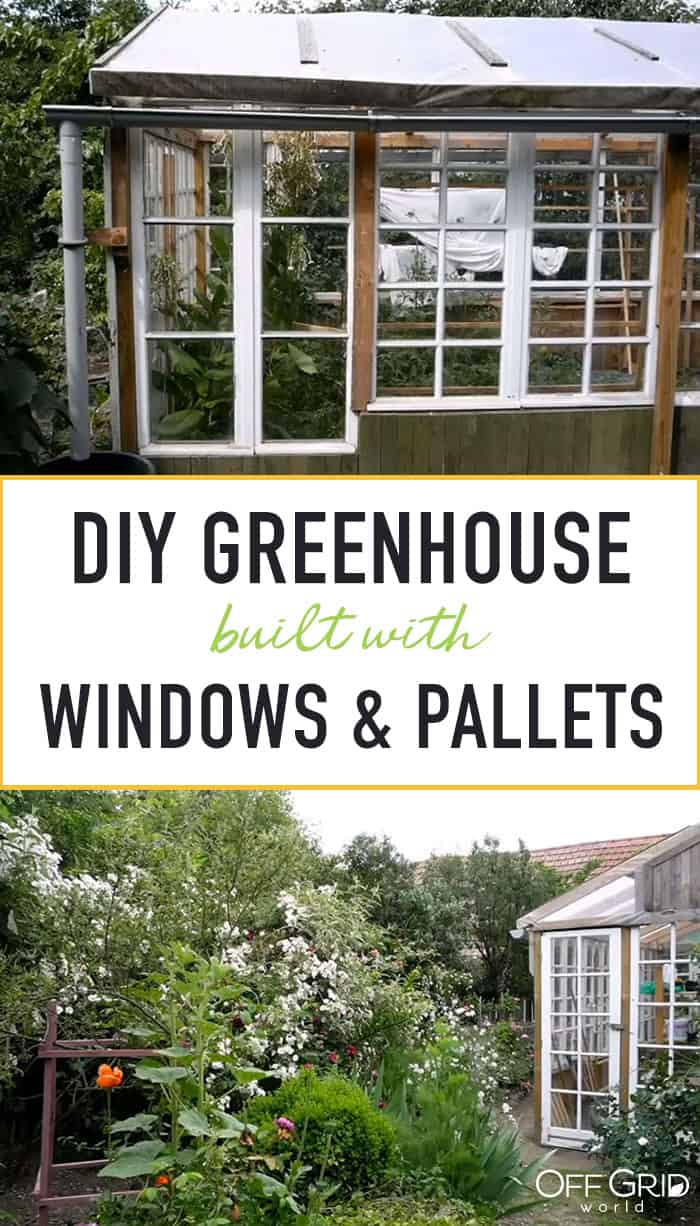 Greenhouse built from old windows and pallets