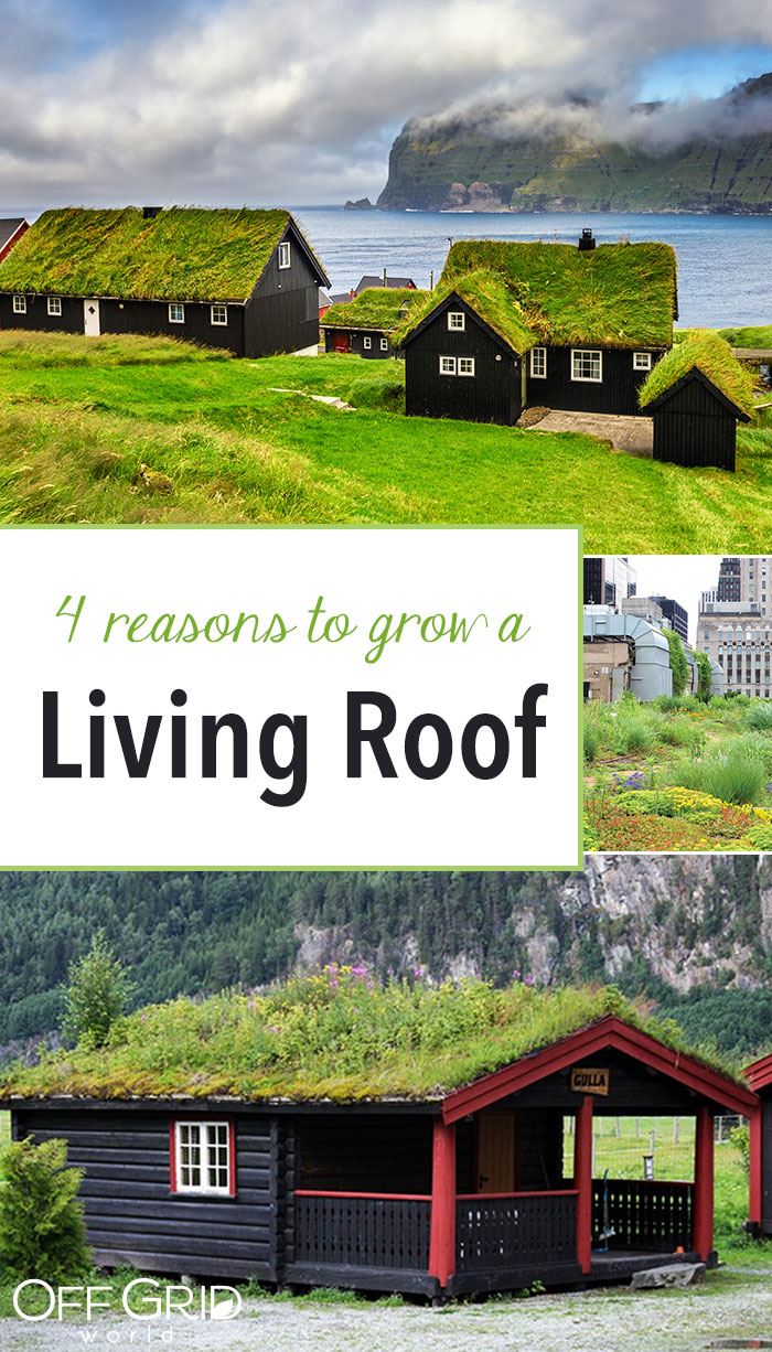 Grow a living roof
