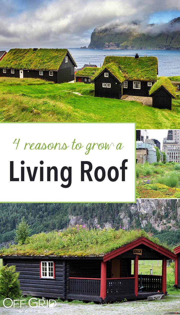 Grow a living roof