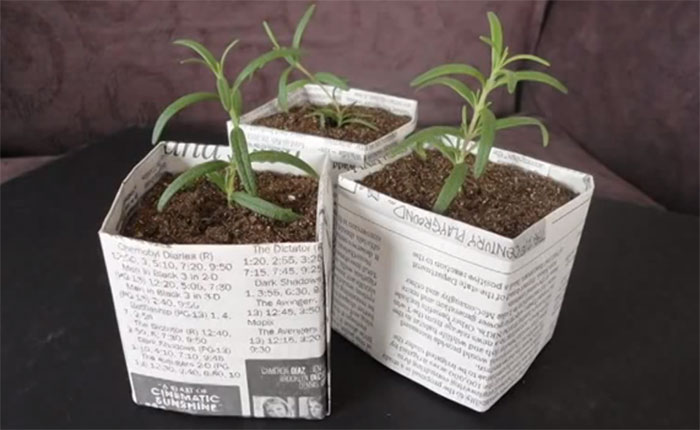 5 Biodegradable Seed Starter Pots Made With Recycled