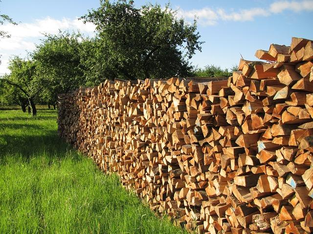 tree-wood-140567_640