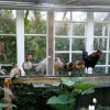 Couple Builds GORGEOUS Greenhouse From Old Windows & Pallets