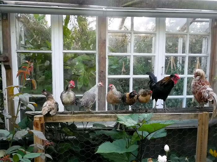Reclaimed windows greenhouse