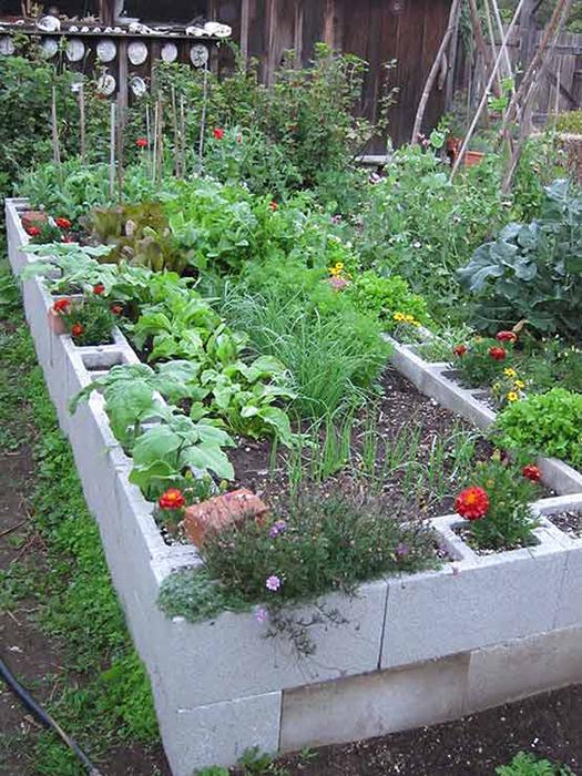 cinder block raised garden beds - Cinder Block Garden Ideas