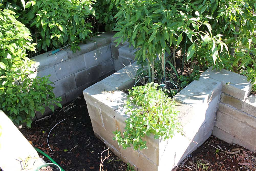 Cinder block garden bed