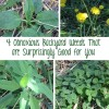 4 Obnoxious Backyard Weeds That Are Surprisingly Good For You