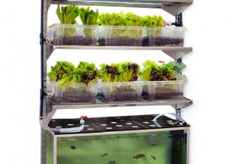indoor-aquaponic