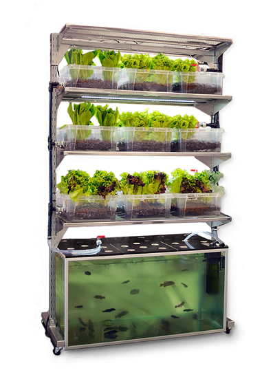 Diy Kitchen Aquaponic System Grows A Meal A Day Off Grid World