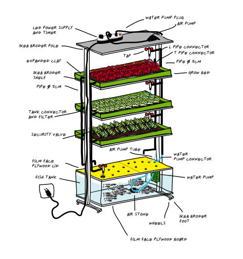 indoor-aquaponic2
