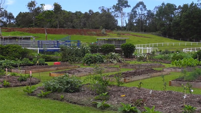 lawn-permaculture1