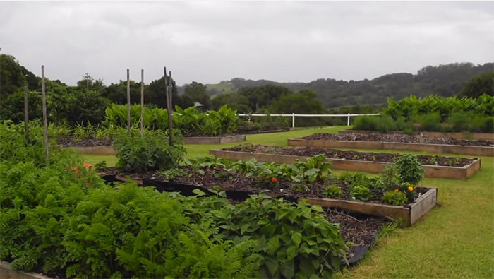 lawn-permaculture12