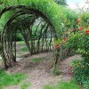 15 Fabulous Living Willow Project Ideas