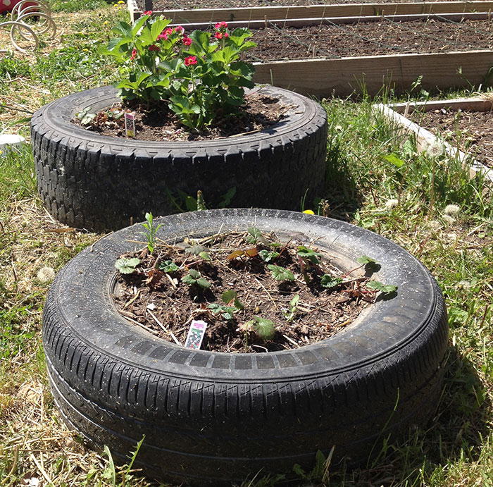 Using tires as planters