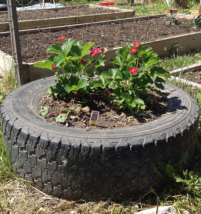 Tire strawberry planter