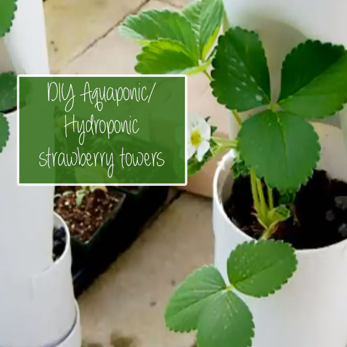 Simple DIY Strawberry Tower for Aquaponic or Hydroponic Growing