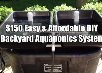 $150 Easy & Affordable DIY Backyard Aquaponics System