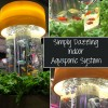 Simply Dazzling Indoor Aquaponic System