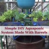 Simple DIY Aquaponic System Made With Barrels
