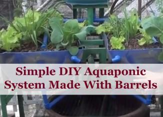 barrel-aquaponics-feat