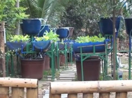 Barrel aquaponic system