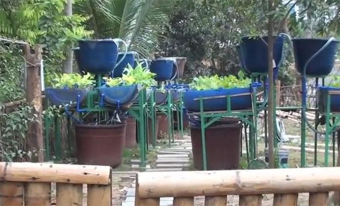 Barrel aquaponic system
