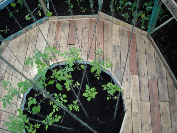 Inside the geodesic dome greenhouse