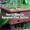 How to Make an Aquaponic Pond System