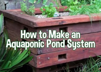 pond-aquaponics-feat