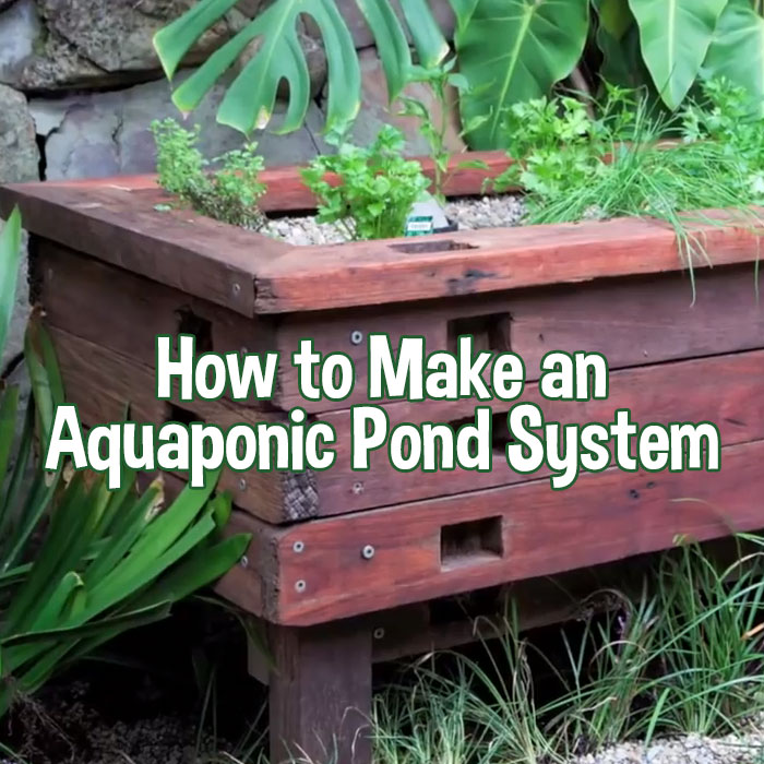 How To Make An Aquaponic Pond System Off Grid World