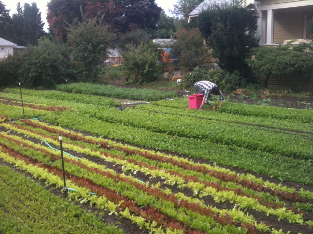 80k Year Farming On 13 Acre Square Foot Gardening