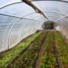 """$80k Year Farming on 1/3 Acre: """"Square Foot Gardening Meets Commercial Farming"""""""