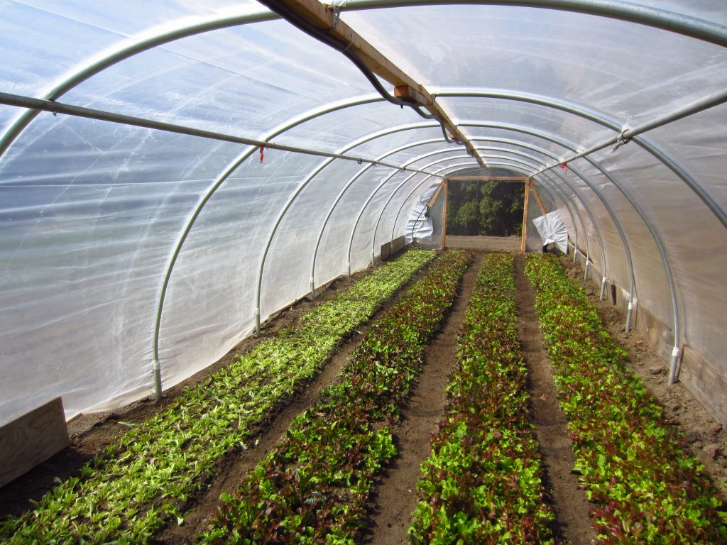 "$80k Year Farming on 1/3 Acre: ""Square Foot Gardening ..."