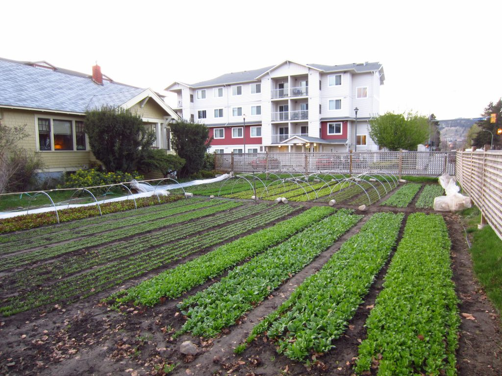 80k year farming on 1 3 acre square foot gardening 1 acre farm layout
